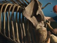 4万5千年前の北極圏に、人の痕跡みつかる。 マンモスの傷から判明