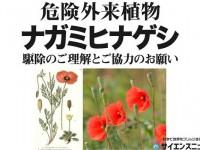 日本に不法入国する植物たち ナガミヒナゲシって何?