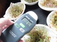 電磁波が植物を発芽させない? 無線LANルーターの害毒は本当か?
