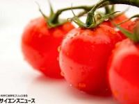 音楽を聞いたトマトは甘くなるのか?