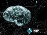 脳を作り出す ヒューマンブレインプロジェクト